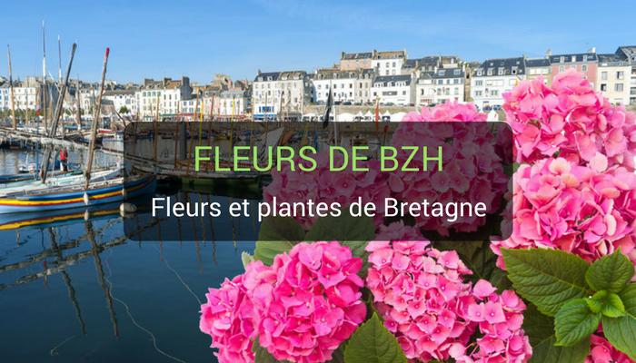 fleurs et plantes en Bretagne